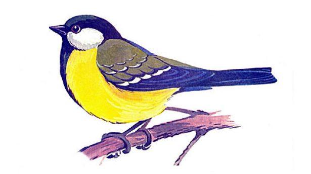 Картинки зимующих птиц