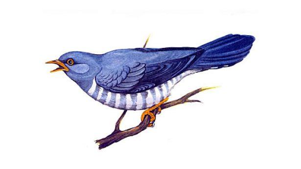 Картинки перелетных птиц