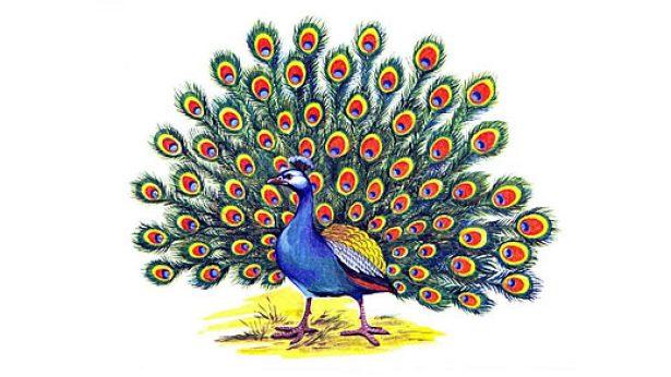 Картинки южных птиц